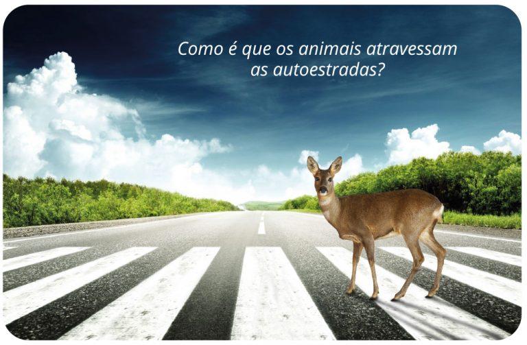 Como é que os animais atravessam as autoestradas - cartão pessoal do Pedro Silva-Santos