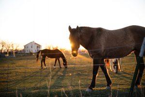 quinta dos cavalos